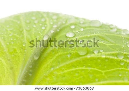 Leaf of the lettuce