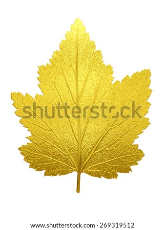 Leaf of the white poplar in Gold - stock photo
