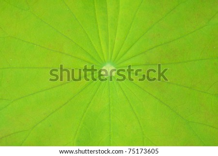 leaf of water lily, texture - stock photo