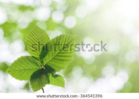 leaf on a tree in the forest.  nature green wood sunlight backgrounds. spring, summer - stock photo