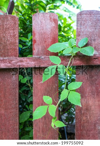 Leaf on the fence - stock photo