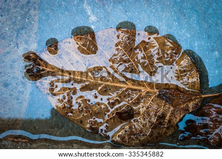 leaf on the tiles. Cyprus - stock photo