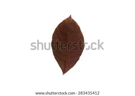 leaf on white background - stock photo