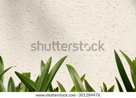 Leaf on white wall (amaryllis leaf)  - stock photo