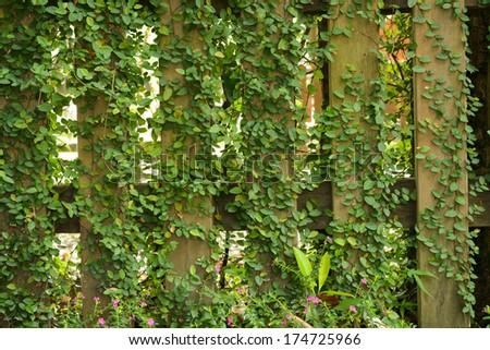 Leaf plant over wood fence, background. - stock photo