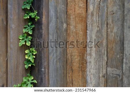 leaf plant over wood fence background - stock photo