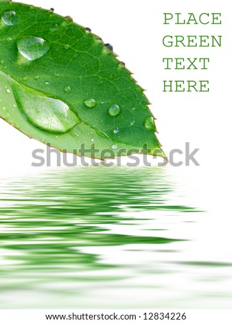 leaf reflection - stock photo