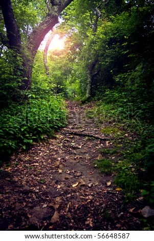 Leaf strewn path through the forest, with lens flare - stock photo