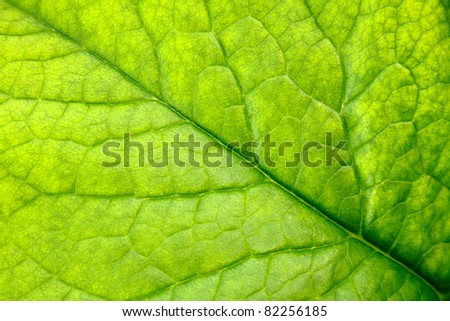 Leaf texture close up - stock photo