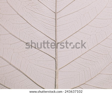 leaf texture in vintage color tone for background. - stock photo