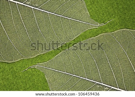 Leaf texture on green background
