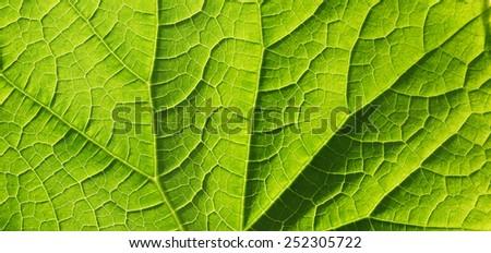 leaf texture, soft focus, blur - stock photo