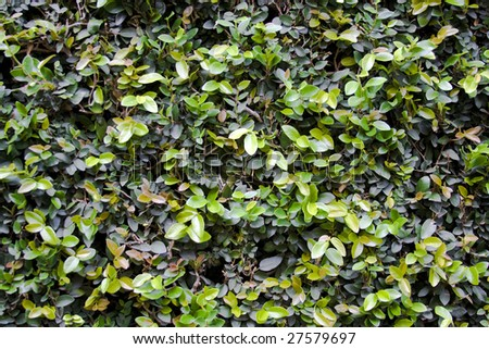 Leaf wall background - stock photo