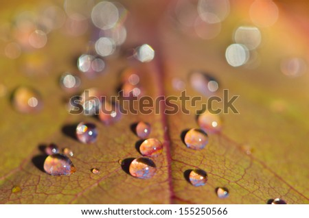 leaf with water drops - stock photo