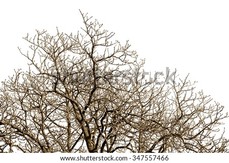 Leafless tree branches with many twigs against a winter sky. - stock photo