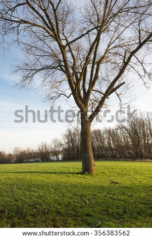Leafless tree with bare branches and twigs against a blue sky. It's early in the morning on a sunny day at the beginning of the winter season. - stock photo