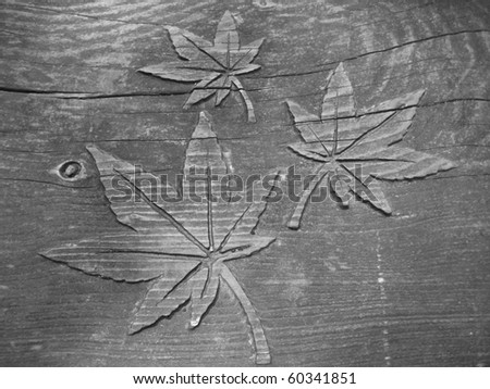 Leafs - stock photo