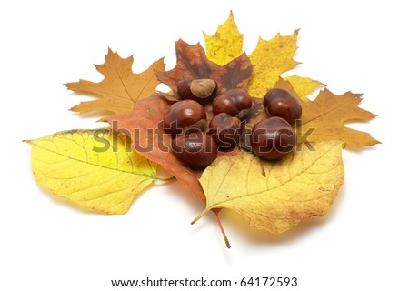 Leafs and conkers on white background