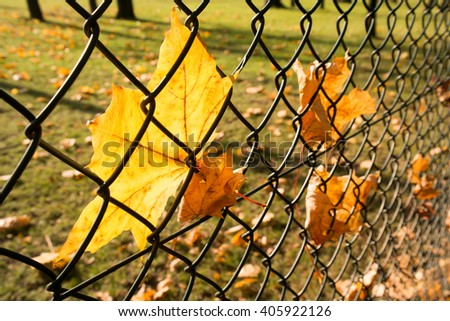 leafs at wired fence, autumn seson - stock photo