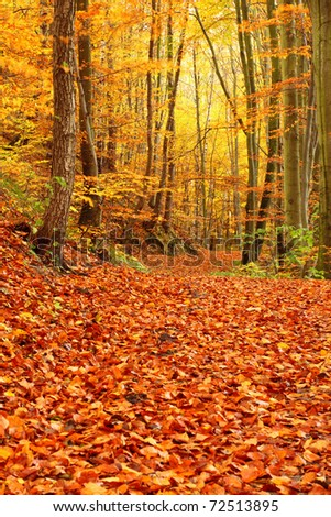 leafs in autumn forest, Poland, Europe - stock photo