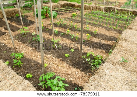 Leafy greens in community garden - stock photo