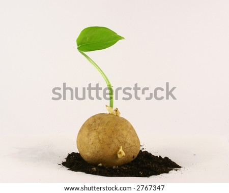 leafy vegetables - stock photo