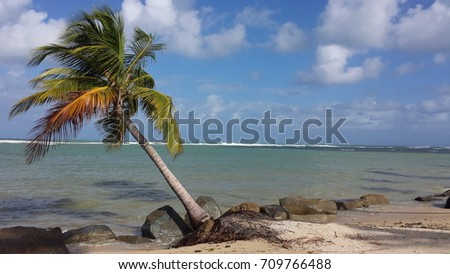 leaning palm tree stock photo edit now 709766488 shutterstock