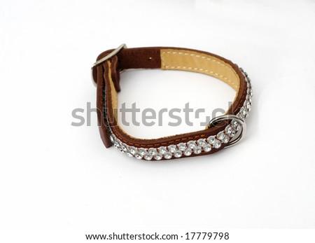 leash - stock photo