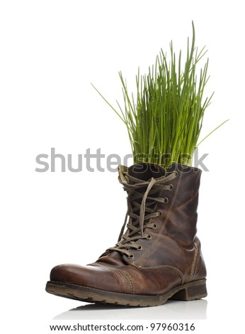 Leather shoe with grass - stock photo