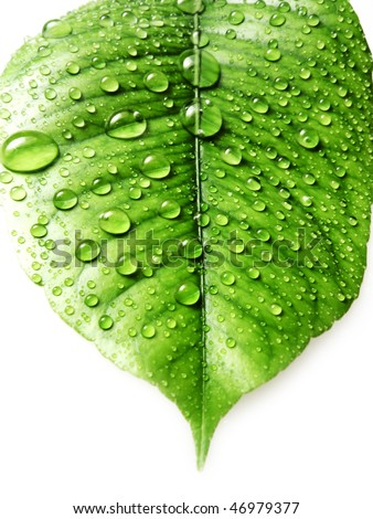 leave  with fresh water drops - stock photo