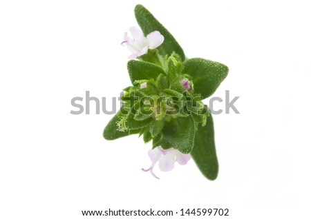 leaves and flowers of thyme close up on white - stock photo