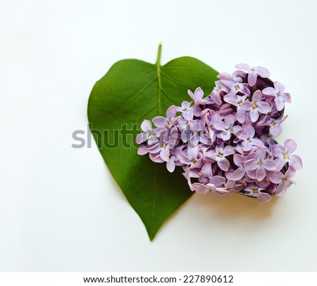 Leaves and petals lilac heart shaped (Valentine's Day, February 14, postcard, love, ecology - concept) - stock photo