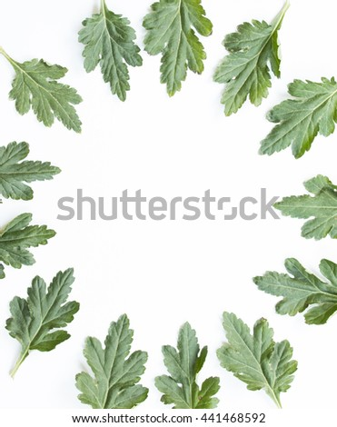 Leaves and space on white background, top view.