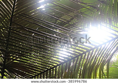 leaves and twig of palm Tree on sunlight background, white tone - stock photo