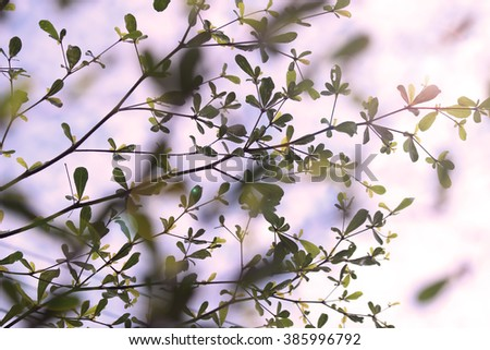 leaves and twig Tree on sky blurry lights background purple tone - stock photo