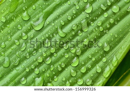 Leaves and water drops - stock photo