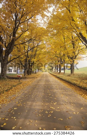 Leaves are turning yellow alongside a rural road in Peacham, Vermont - stock photo