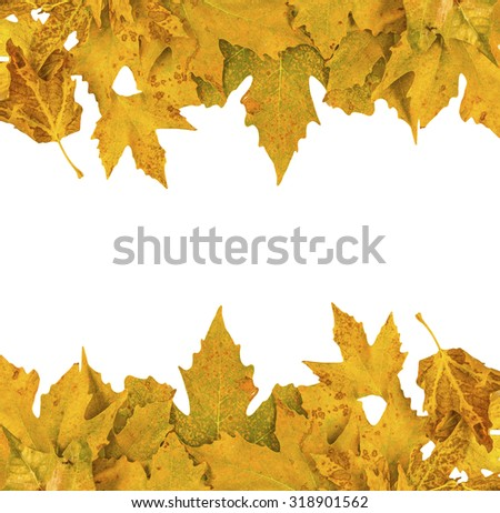 leaves autumn space for your text