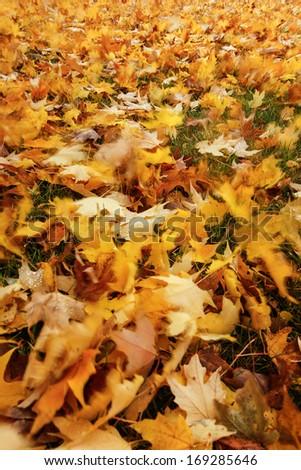 Leaves blowing across a yard.  Swartz Creek, MI, USA. - stock photo