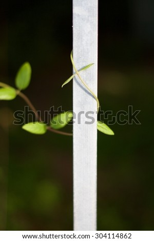 leaves climbing on a metal gate - stock photo