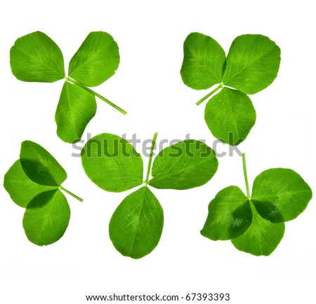 leaves clover isolated on white - stock photo