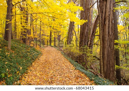 leaves covering a trail through the forest in autumn - stock photo