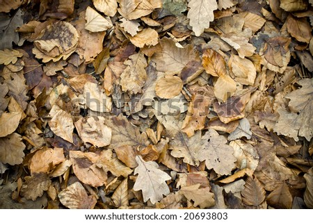 leaves covering the ground. - stock photo