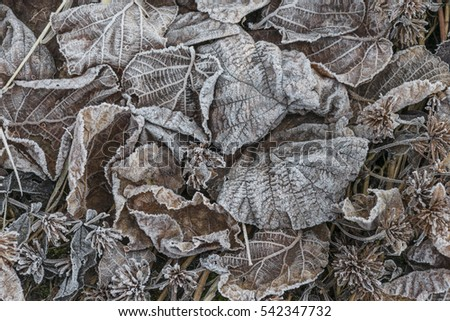 leaves during winter