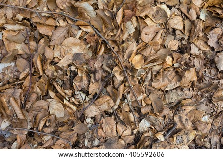 Leaves ground texture close up background