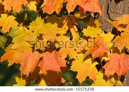Leaves in a tree.