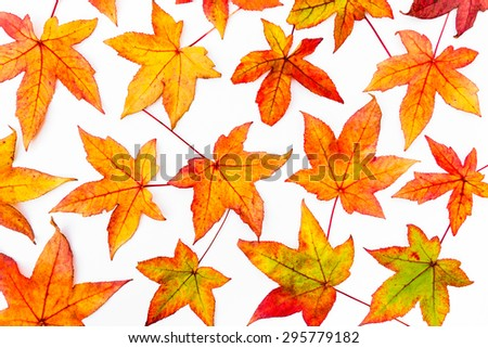leaves in autumn colors - stock photo