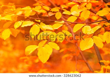 leaves in autumn forest - stock photo