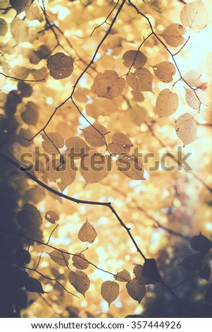 Leaves in autumnal colors - stock photo