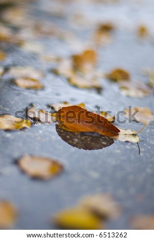 leaves in mud puddle